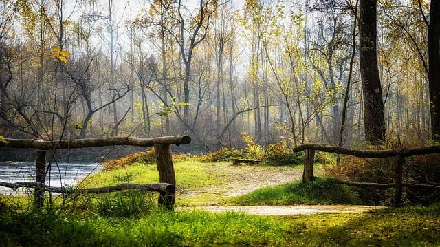 autumn-2986075_640.jpg